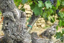 Tenuta Sette Ponti / Nella splendida Toscana del Chianti e del Sangiovese, in una atmosfera magica e antica, la Tenuta Sette Ponti esprime al meglio la propria passione per la vigna.