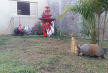 Meu jardim é meu sonho