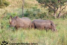 Latest Safari Photos By Karen / Photos By Nhongo safaris Guide Karen