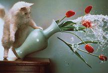 Macskamánia / cicákról mindent