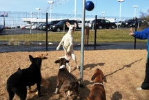 Kennelwood DayCamp / by Kennelwood Pet Resorts