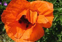 Floristik - Videos - Diy / Blumendekoration ❁ Dekotipps ❁ Basteleien
