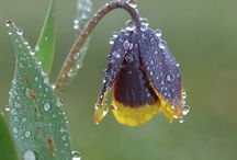 flowers.drop