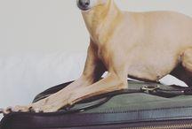 Hund und Urlaub / Urlaubsziele mit Hund etc.