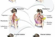 Anatomy/physiopatology
