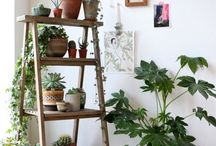 Inreda med växter