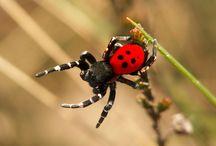 Ladybirds spiders