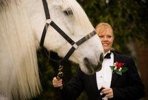 Destiny Horse & Carriage / Ocala Wedding & Events Expo 2016 Partner. / http://www.destinyhorseandcarriage.com Destiny Horse and Carriage is a female owned and operated business, and your wedding specialist since 2005 (352) 615-0830  DestinyFarmFL @ aol.com