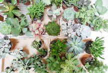 vegetal love