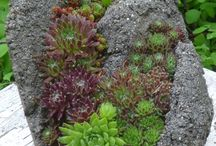 Hypertufa - Yes, you can make it! / Container gardening in DIY concrete mixtures / by National Garden Clubs, Inc.