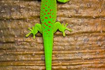 Reptiles / iguana pets / Pictures of my favorites