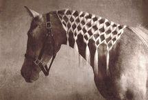 Horses < 3