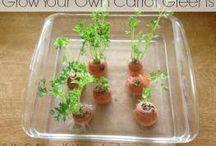 Plante à faire pousser dans la cuisine