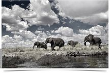 DUO and BW Photography  #1 / Wildlife, landscapes and portraits in AFRICA