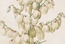 Botanical illustrations / The art of plants