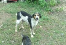 Cani da salvare e amare / cani in difficoltà e abbandonati che hanno bisogno di una casa e di amore