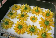 Fresh flowers in resin