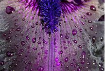 Purple! / by Michelle Persons