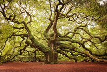 Arbre extraordinaire / A collection of beautiful, unique, extraordinary trees that exist.