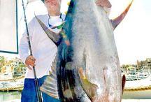 Offshore Fishing / Offshore Fishing