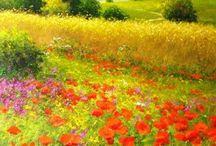 peisaj floral
