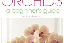 Orchids / Growing orchids