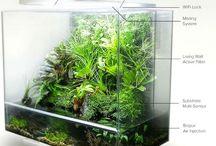 терарриум аквариум