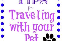 Pet Travel / Cool tips for traveling with your furry friends as collected by Anacapa Animal Hospital in Ventura, CA.
