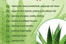 Bylinky a jejich účinky