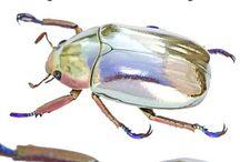 Pretty Beetles
