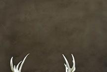 antlers / by jillian scott