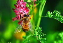 Flowers, birds & bees