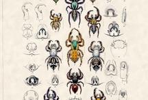 Kuvituksia - illustration