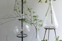 Cool plant ideas