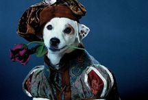 Shakespeare In Pop Culture