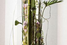 Optima flowers