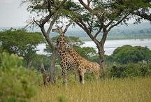 Travel - Uganda