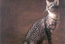 Pets / by Chandra Benton