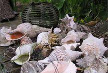 Sea Shells, Driftwood, Oceans... / by Ellen Price