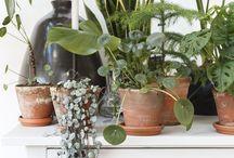 Living - Plants, plants, plants