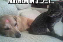 Furry Friends / Cats and dogs are known enemies, but sometimes they can be great friends.