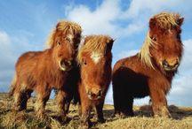 Pony Pleasers