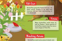 attirer les papillons et les nourrir
