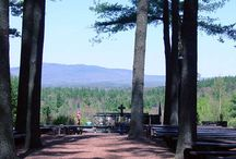 Cathedral of the Pines View