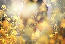Yellow Dreams
