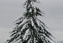 Christmas/winter / ...