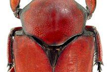 owady i insekty