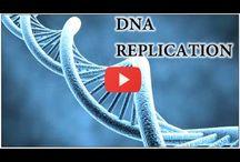 Genetics and Biology / Genetica -Biologie