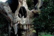 Skulls*