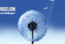 Dandelion Live Wallpaper v1.6.2 (Mod Ad Free)